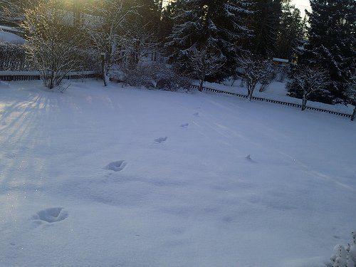 Spår i snön 1